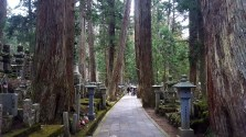 the path to Kobo Daishi's mausoleum