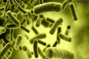 Απολύμανση…και ξεφορτωθείτε τα μικρόβια