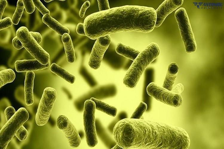 mikrovia