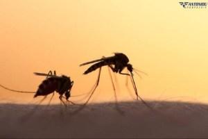 Πώς να απαλλαγείτε από τα κουνούπια, κάνοντας απεντομώσεις στο χώρο σας