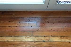 Δείτε πως θα εξαφανίσετε τα σκουλήκια από το σπίτι σας