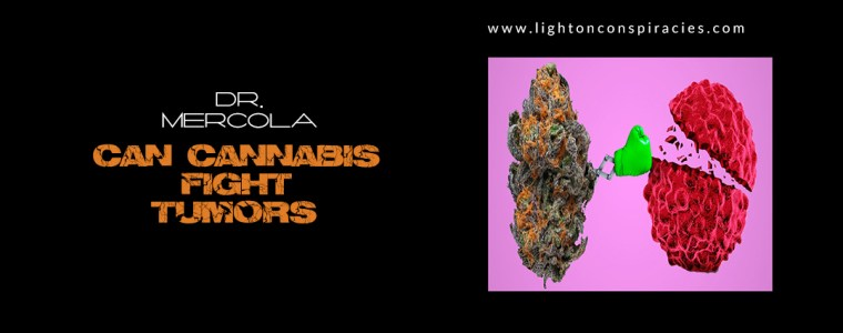 Can Cannabis Fight Tumors? | Light On Conspiracies – Revealing the Agenda