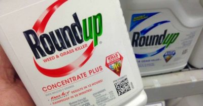 """With """"Mountainous"""" Evidence on Plaintiffs' Side, Hundreds of Cancer Cases Against Monsanto Get Green Light 