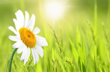 Steun voor sierbloemen zonder gif, schoon en mooi –