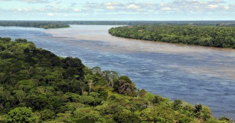 Greenpeace: import van hout uit Amazone boordevol fraude
