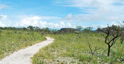 De gevolgen van de komst van vele multinationals naar Centraal-Brazilië