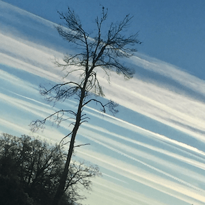 Geoengineering, Climate Collapse, Dead Leaves, And Defoliants