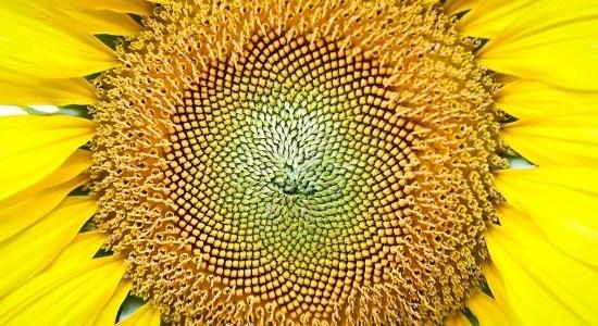 Schoonheid ligt vast in een magisch getal: de gulden snede – De Lange Mars Plus