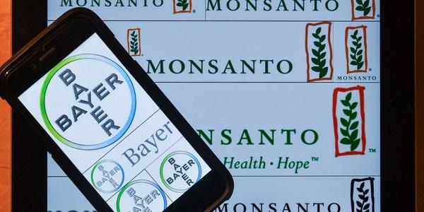Saatgut-Händler erwägen Klage gegen Monsanto