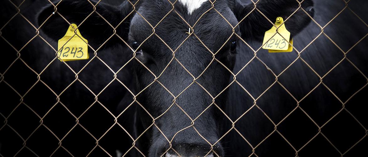 Von der Würde der Tiere II | KenFM.de