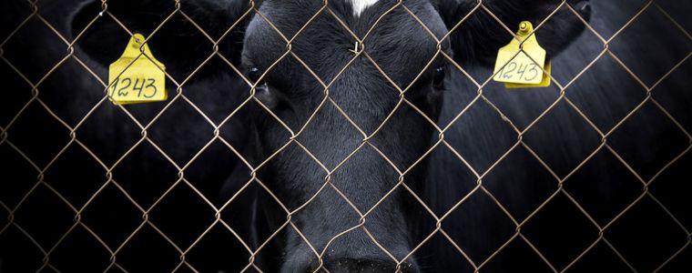 Von der Würde der Tiere II   KenFM.de