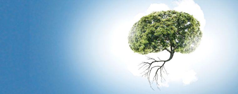 Tagesdosis 19.9.2018 – Wie kann man einen Wald kaufen oder verkaufen? | KenFM.de
