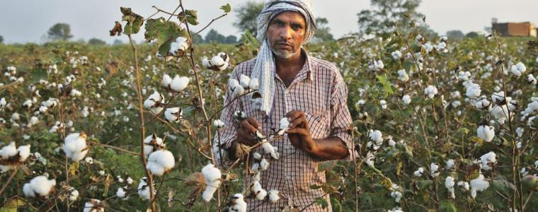 genetically-engineered-bt-cotton-reckless-gamble-for-profit-that-placed-indian-cotton-farmers-in-corporate-noose-8211-global-research