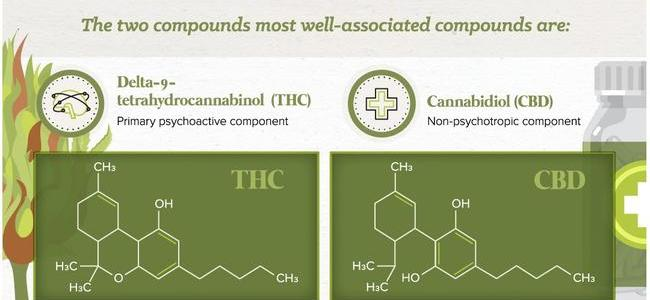 the-science-behind-the-medical-cannabis-industry