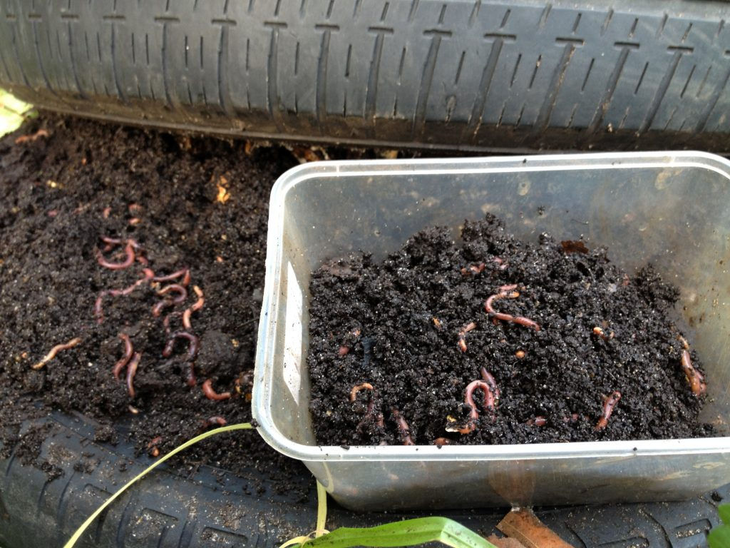 earthworm-research-spurs-farmers-to-act-8211-global-research