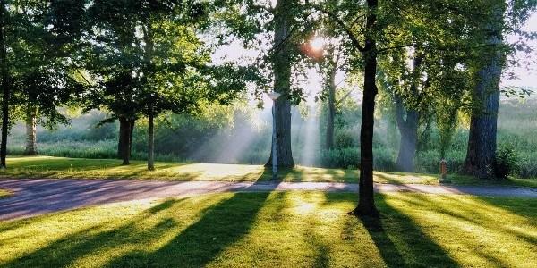 zeven-redenen-voor-de-massale-#bomenkap-–-de-lange-mars-plus