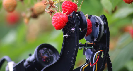 watch:-world's-first-raspberry-picking-robot-completes-field-tasks