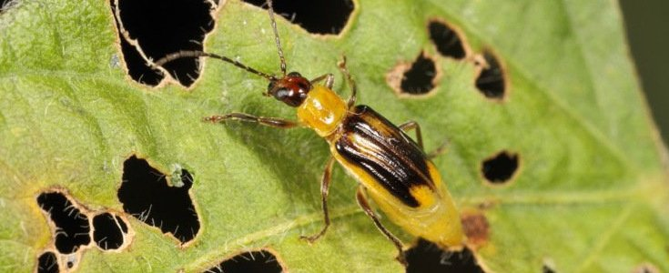 """""""the-great-insect-dying""""-in-europe-and-north-america,-numerous-insect-species-in-decline,-confirmed-by-entomologists-–-global-research"""
