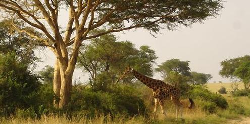 olriese-«total»-will-in-ugandischem-nationalpark-nach-ol-bohren