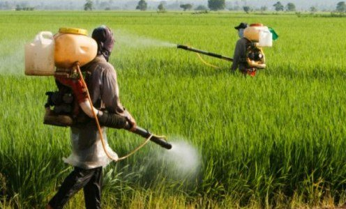 poisoned-for-profit:-we-are-not-the-agrochemical-industry's-guinea-pigs-–-global-research