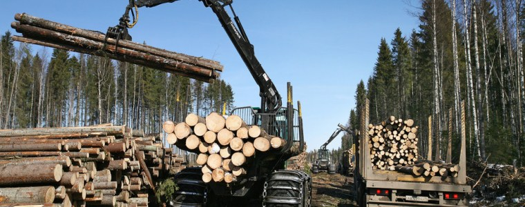 lost-forests:-russia-considers-banning-lumber-exports-to-china-over-concerns-about-illegal-logging