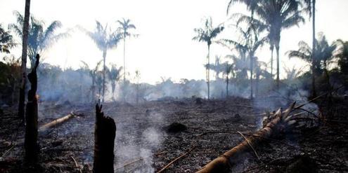 in-brasiliens-amazonas-becken-verbrennt-die-lunge-der-welt.