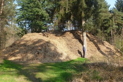 stop-grootschalige-bomenkap;-een-ander-en-duurzamer-natuurbeleid