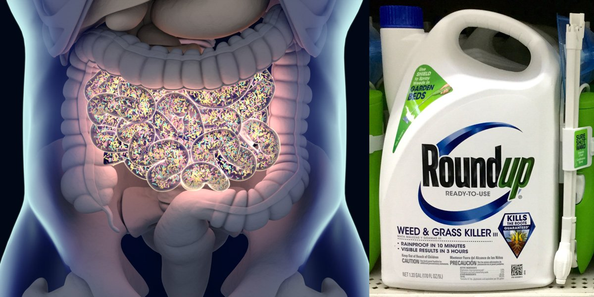 glyphosate-and-roundup-proven-to-disrupt-gut-microbiome-by-inhibiting-shikimate-pathway-–-global-research