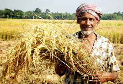 genetically-modified-seeds-in-india:-faking-it-on-the-astroturf-–-global-research