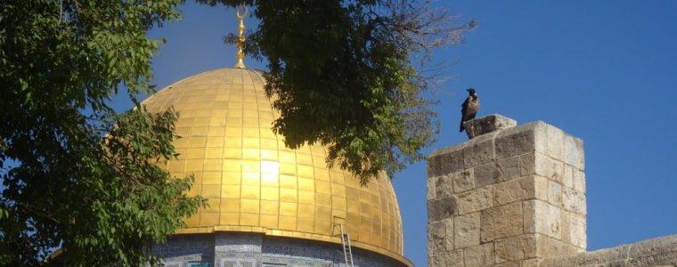 arabische-wereld-poogt-verdeeldheid-over-'vredesplan'-toe-te-dekken-–-dewereldmorgen.be