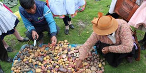 der-agrar-sortenschutz-bedroht-kleinbauern-in-aller-welt