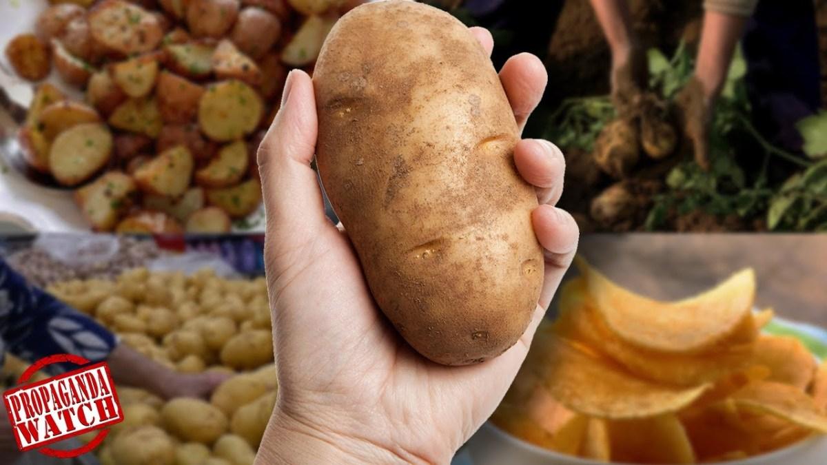 how-did-potatoes-get-so-popular?-–-#propagandawatch