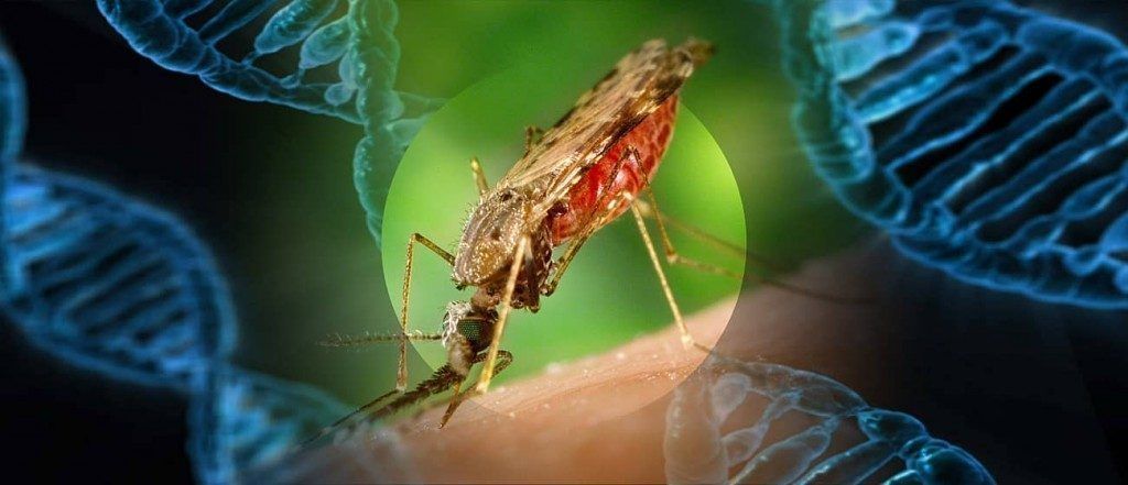 750-million-genetically-engineered-mosquitoes-are-being-released-in-florida-despite-environmental-opposition-–-activist-post