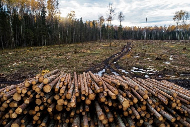 milieuramp-:-ontbossing-in-noord-europa-met-49%-gestegen