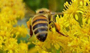bewijs-dat-straling-van-mobiele-telefoons-bijen-doodt.