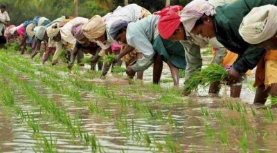 viral-inequality-and-the-farmers'-struggle-in-india-|-asia-pacific-research