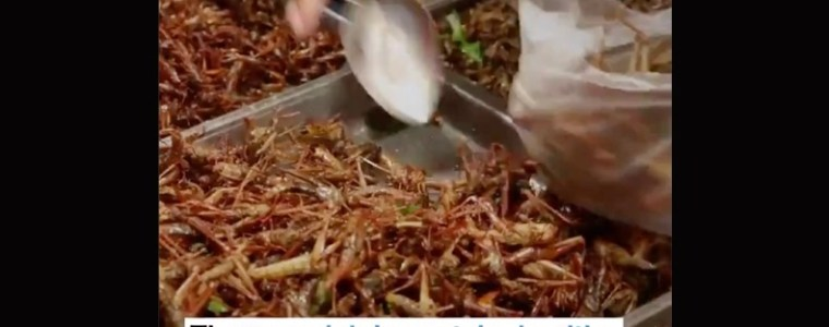 great-reset:-insecten-eten-en-rioolwater-drinken-is-de-toekomst,-verkondigt-het-wereld-economisch-forum-–-frontnieuws