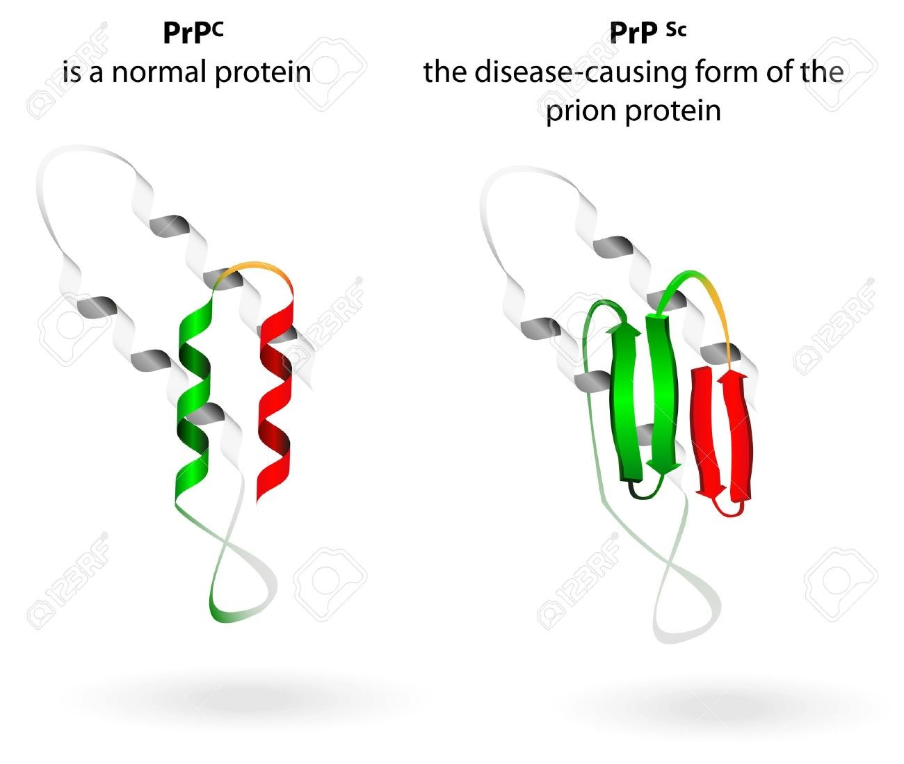 rnas-that-behave-like-prions-robert-gorter,-md,-phd