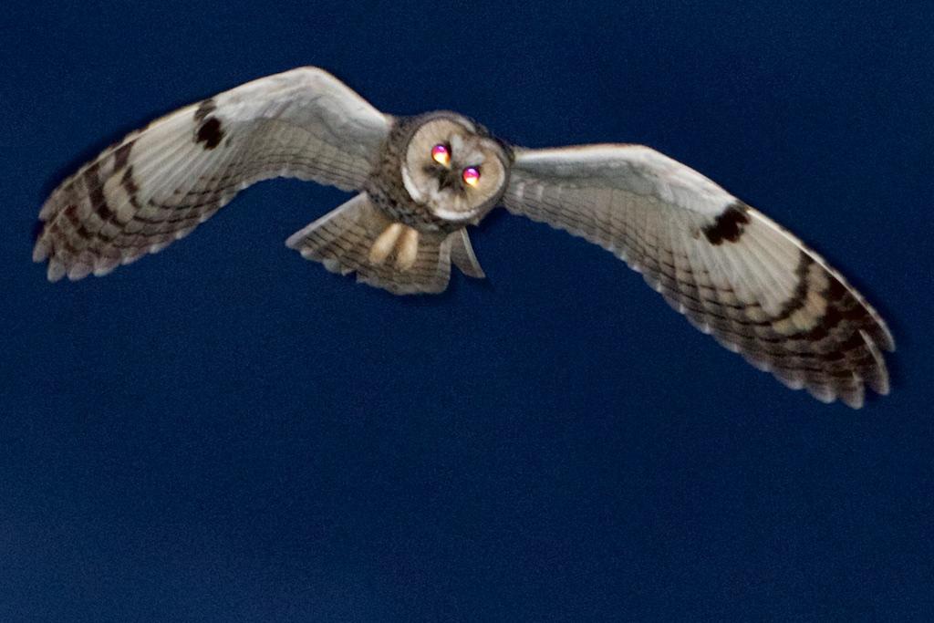 de-uilen-zijn-uit-langweer-verdwenen…(waarom?)-–-interessante-tijden