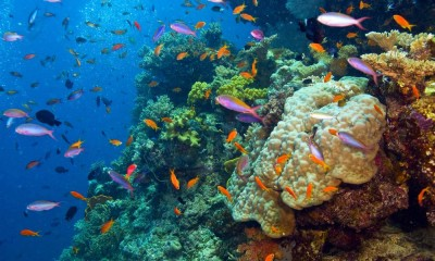 the-great-barrier-reef-wars-|-asia-pacific-research