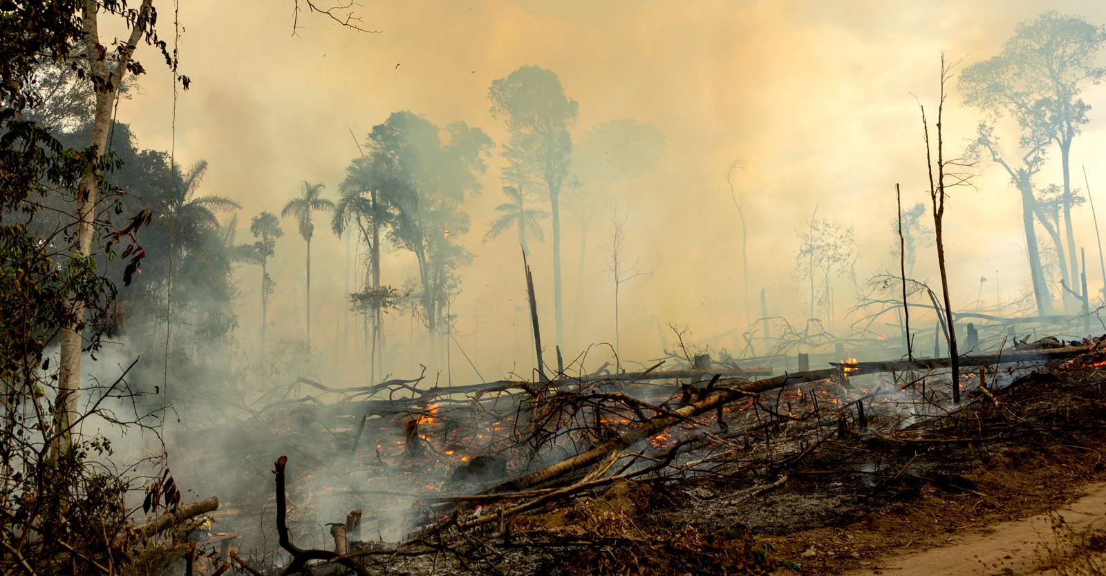 'terrifying'-new-research-shows-amazon-flipped-from-carbon-sink-to-carbon-source