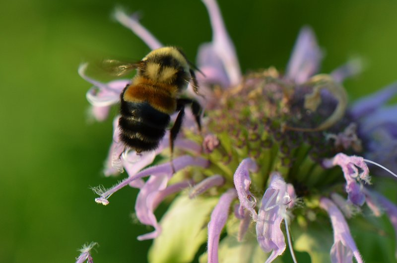 epa:-neonicotinoid-pesticides-harm-vast-majority-of-all-endangered-species