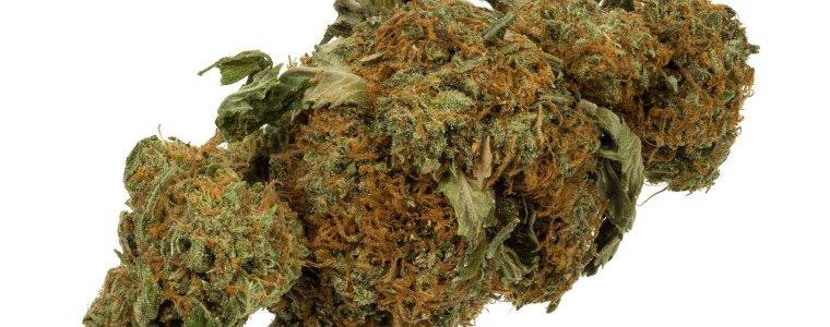 de-geplande-legalisering-van-cannabis-in-duitsland-is-niet-wetenschappelijk-gerechtvaardigd