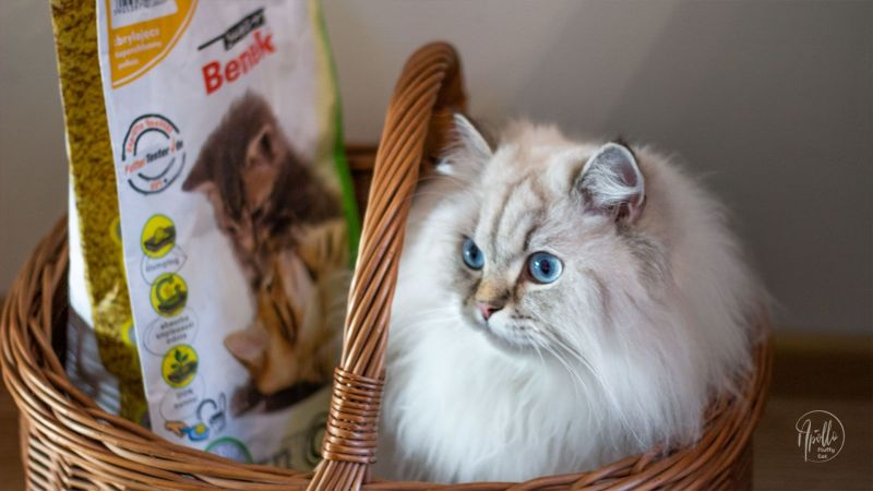 Review: Super Benek Corn Cat litter