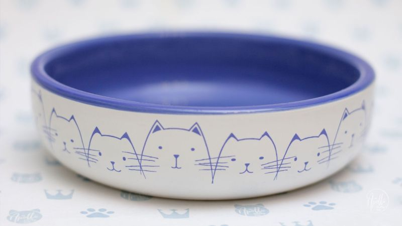 How to choose best bowl for your cat?