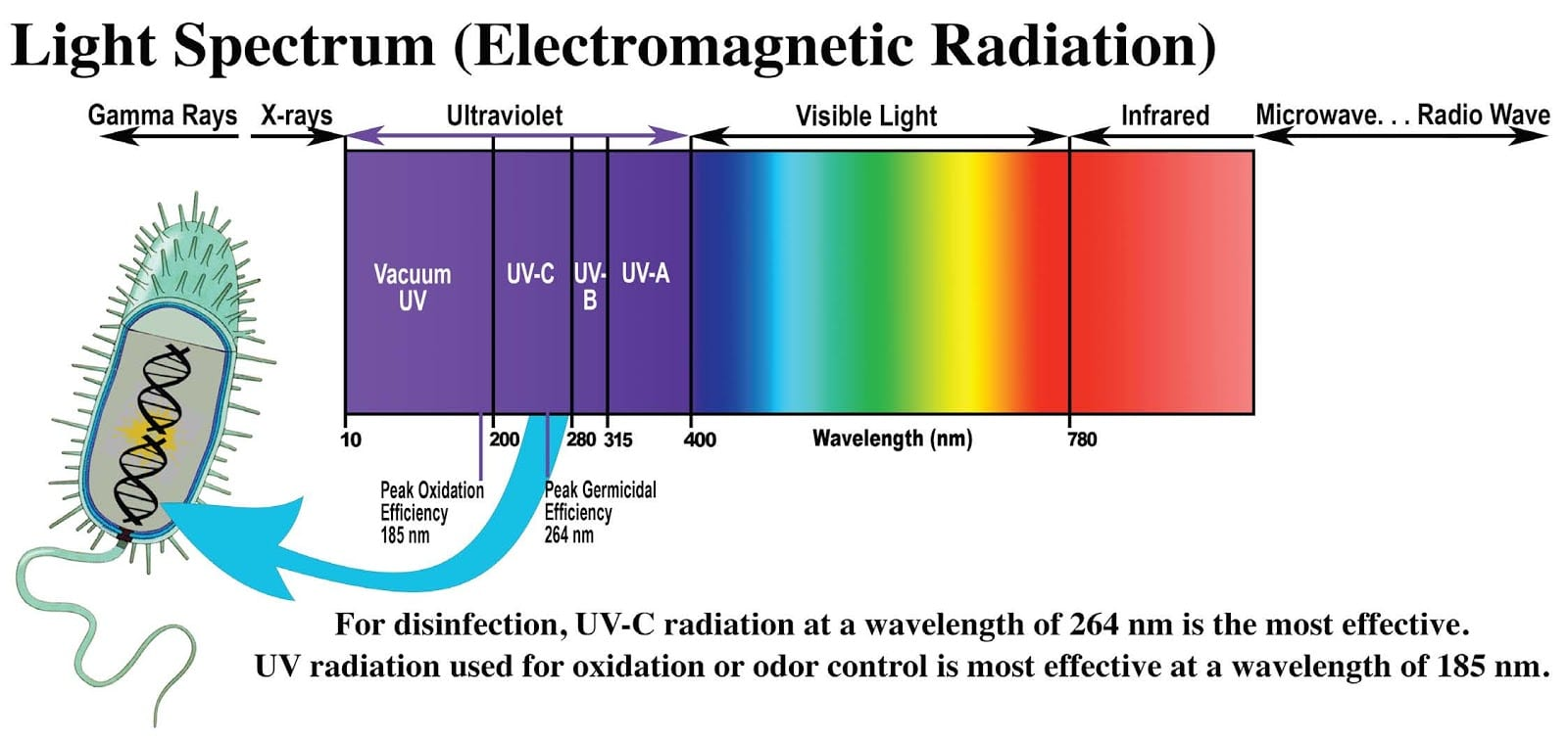 Can UV Light Kill the Novel Coronavirus? | Apollo Heating ...