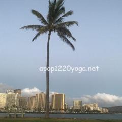 ハワイの到着日にはマッサージがおすすめ!私が体験した神の手とは?