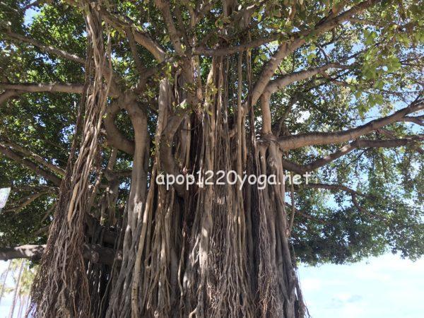 ハワイ旅行カピオラニ公園