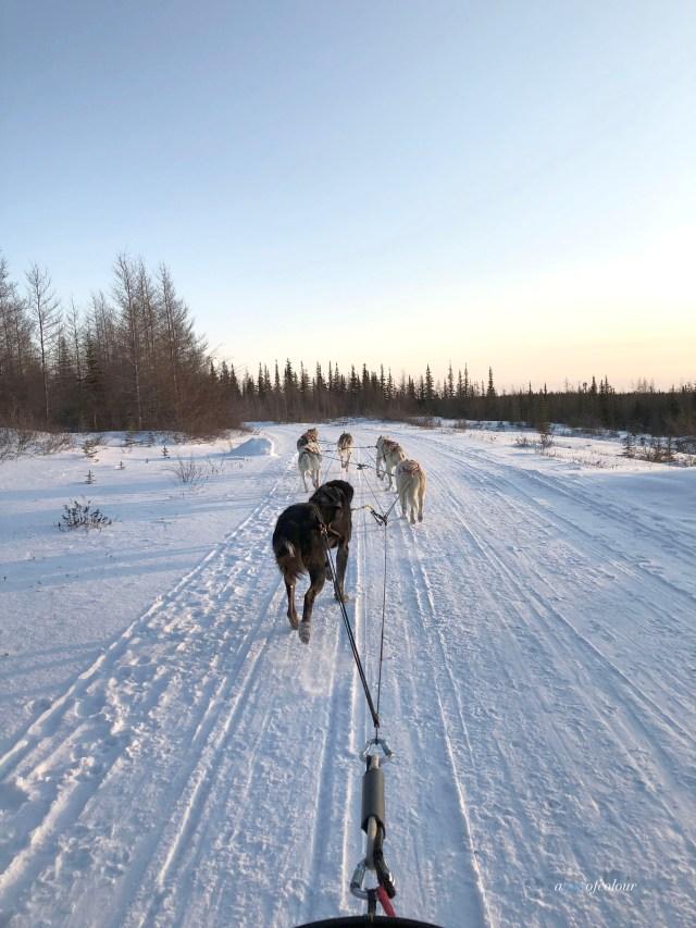 Dog sledding at Wapusk Adventures in Churchill, Manitoba