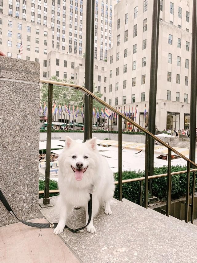 Dog at Rockefeller Center in New York
